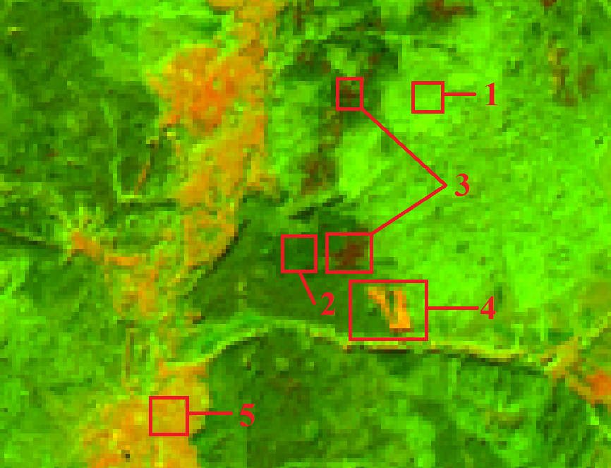 Отметка тестовых участков на местности: 1 - лиственный лес 2 - хвойный лес 3 - нарушенный лес, усыхание 4 - санитарная вырубка, голая почва 5 - пойма реки, голая почва